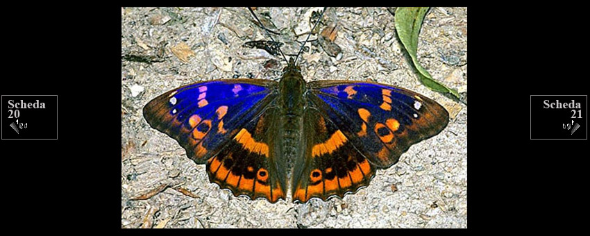 Entomologia colorazione - Colorazione dei bruchi ...