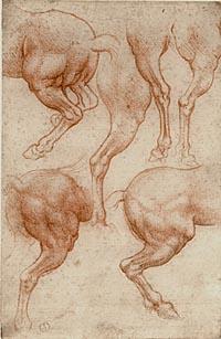 Disegni di leonardo for Disegni di cavalli a matita